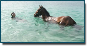 What better way to unwind yourself and your horse than with a relaxing swim after a long ride around the Island
